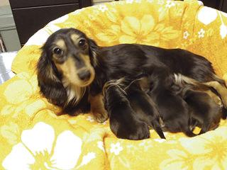 2014.3.26出産 ブラクリ男の子、Sクリ男の子、ブラクリ女の子、Sクリ女の子