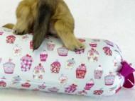 (千葉県・S様) シェーデットクリーム男の子 カニンヘンダックス・ユジンの子犬