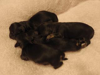 6月12日 カニンヘンのしずるが無事4頭の赤ちゃんを出産しました!