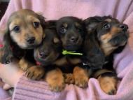 ルチアhp & ブルースの子犬達