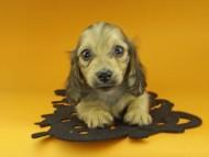 クム & スカッシュの子犬 イエロー 女の子(1)
