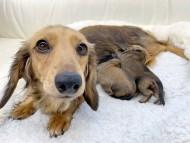チャーム 子犬を出産しました