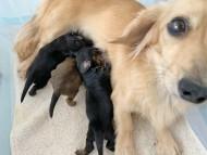 シール 11月21日 子犬の出産