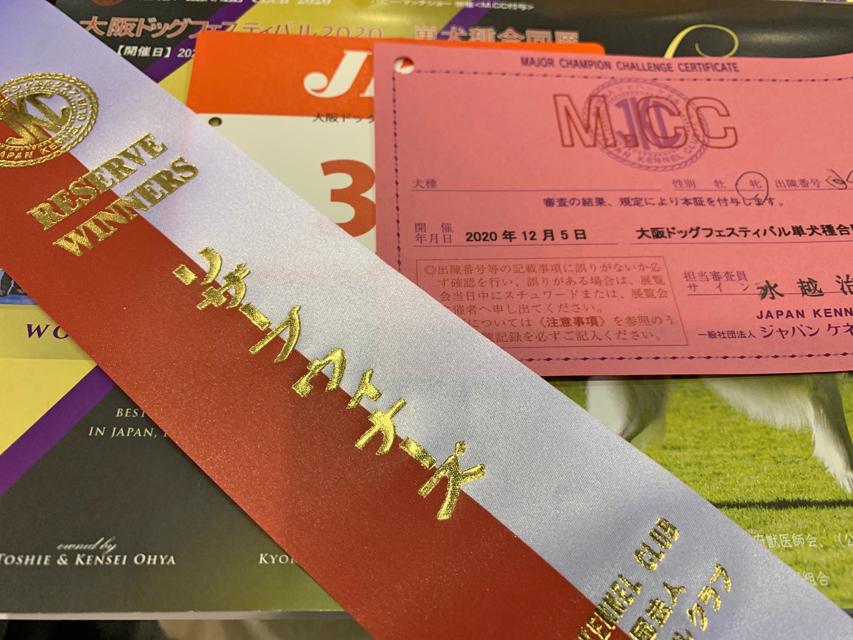【ドッグショー】ルーシー 2枚目のカード獲得