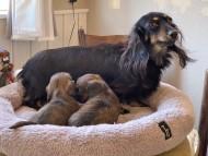 サファリ 11月29日 子犬の出産