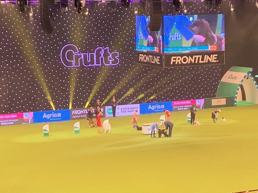 Crufts 2019 ベストインショーはパピオン!
