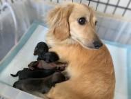 シール 5月10日 子犬の出産