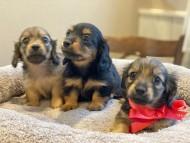 シール & ブルースの子犬達