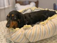 アイビー 3月9日 子犬の出産
