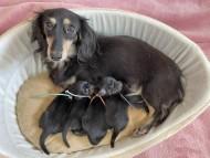 カイラ 8月25日 子犬の出産