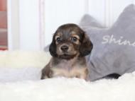 メロディ 3月11日 子犬の出産