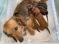 チャーム 6月8日 子犬の出産