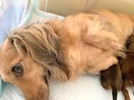 リン 9月27日 子犬の出産