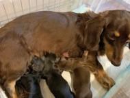 ジャム 10月8日 子犬の出産