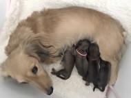 ティナ 10月22日 子犬の出産