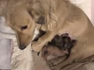 ティナ 12月27日 子犬の出産