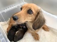 KT 1月14日 子犬の出産