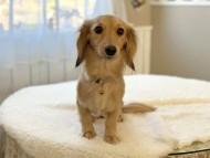 ティナ 2月16日 子犬の出産