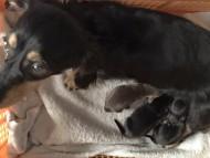 パセリ 4月20日 子犬の出産