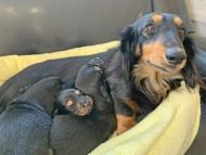ララ 12月30日 子犬の出産