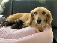 シエラ 3月18 子犬を出産しました