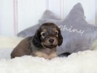 オーロラ 3月21日 子犬の出産