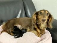 ジル 9月7日 子犬の出産