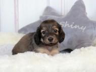 ナンシーcs 8月28日 子犬の出産
