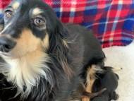まる 3月3日 子犬の出産