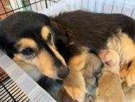 ソフィア 4月7日 子犬を出産しました