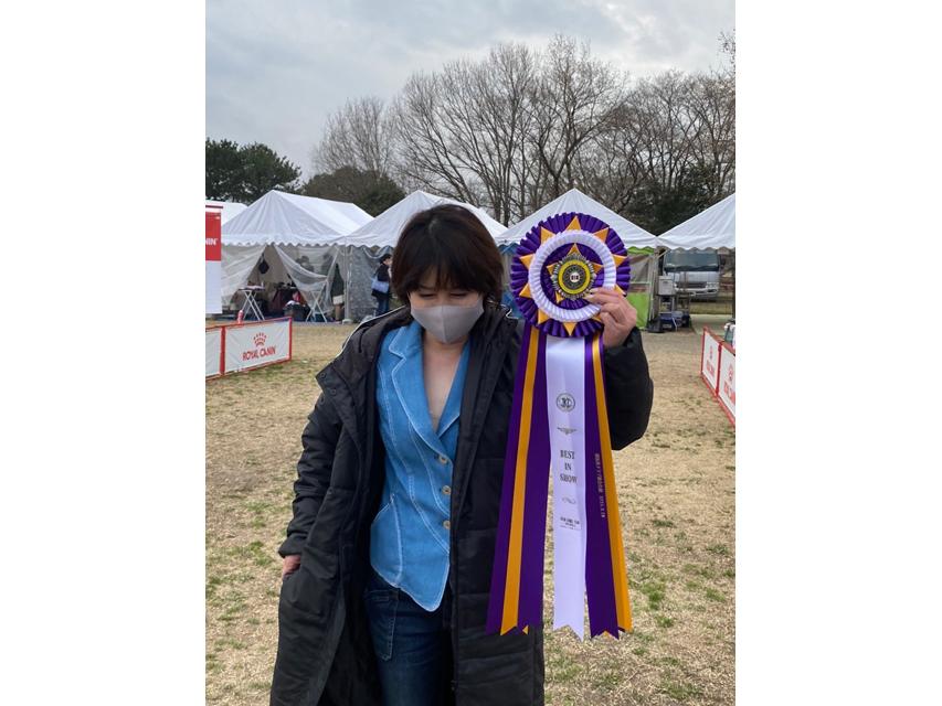 【ドッグショー】ミニチュアダックスフンド マモ〜ル ベストインショー
