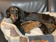 ララcs 10月6日 子犬の出産
