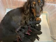 ミスト 10月18日 子犬の出産