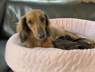 ローリー 9月18日 子犬の出産