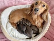 メイプルhp  5月6日 子犬を出産しました