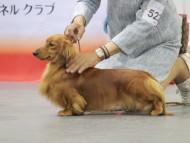 【ドッグショー】まも〜る ジャパンインター