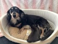 すずhp 10月19日 子犬の出産