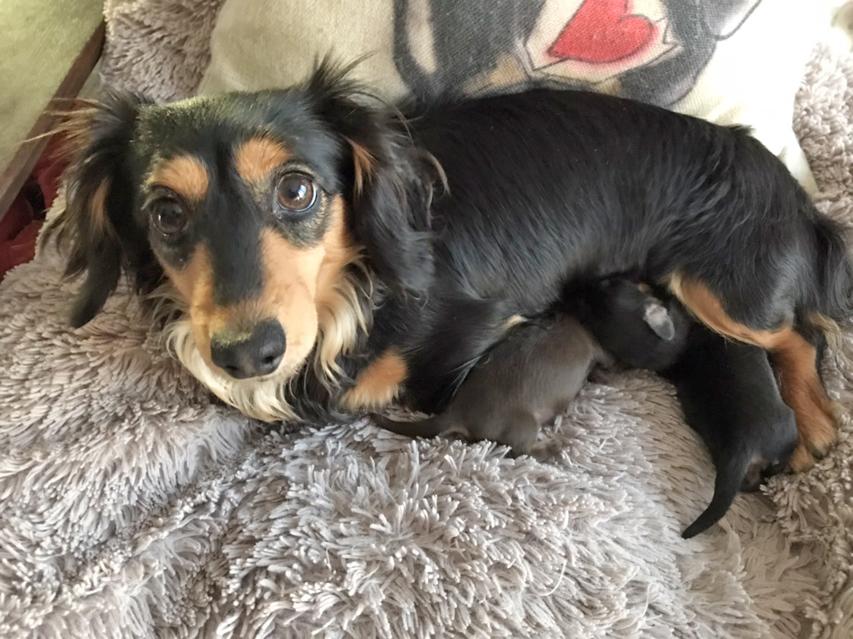 カニンヘンダックス ラムネkk 2月24日 子犬の出産
