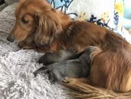 トマト 5月29日 子犬の出産