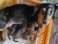 ラムネ 6月20日 子犬の出産