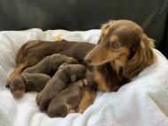 ジル 11月14日 子犬の出産