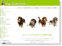 ダックスフンド交配(極小カニンヘン交配犬、ミニチュアダックス交配犬)による繁殖