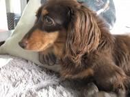 プラムkk 7月19日 子犬の出産