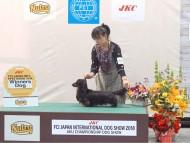 【ドッグショー】FCIジャパンインターナショナルドッグショー2018 フレディ ウィナーズ