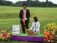 【ドッグショー】熱海愛犬クラブ展 竹千代 ニューチャンピオン