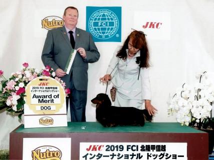 【ドッグショー】東京東オールダックスフンドクラブ展 フレディ JKCチャンピオン完成