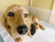 アンナ 11月18日 子犬を出産しました