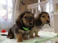 ヒナプリ&ナイトの子犬