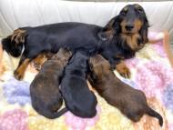 ジャジー 12月4日 子犬の出産