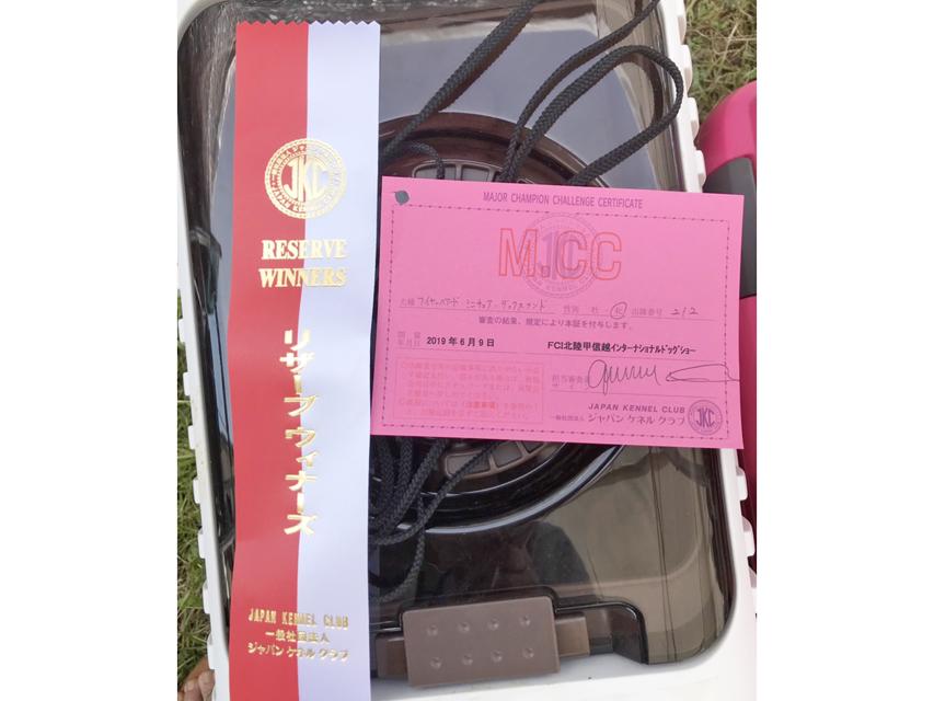 【ドッグショー】FCI北陸甲信越インターナショナルドックショー アバロン リザーブウィナーズ メジャーカードをゲット
